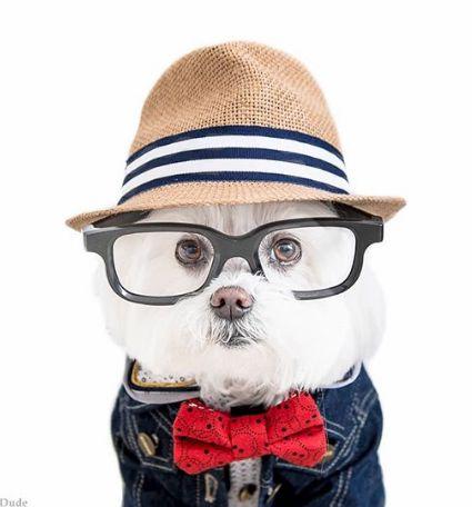 おしゃれなメガネ犬【Instagram】が愛らしい!画像